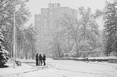 Графичность мартовского снегопада...