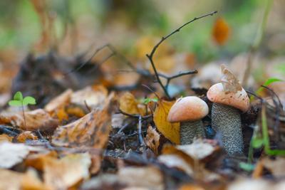 Попробуй найди подосиновик лес осень трава листья