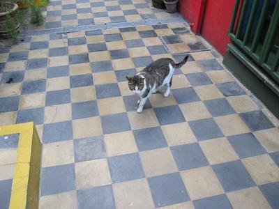б.н. кот