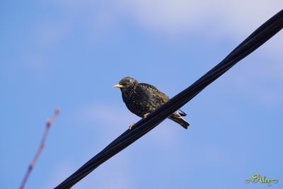 Скворец птица скворец весна