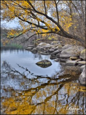 *** река камни ива осень отражение