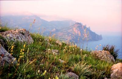 Мягкость лета. крым горы киммерия лето лисья бухта