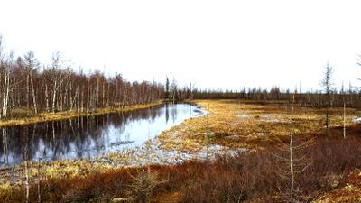 Весна на севере север весна тундра природа пейзаж телефон НовыйУренгой ЯМАЛ речка