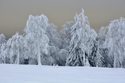 Декабрь уж наступил*** деревья снег мороз