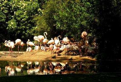 Фламинго природа зоопарк фламинго животные в неволе птици