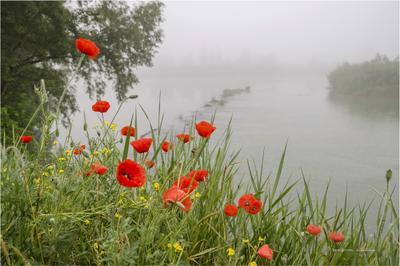 Мой дальний берег детства.. весна утро река берег туман маки