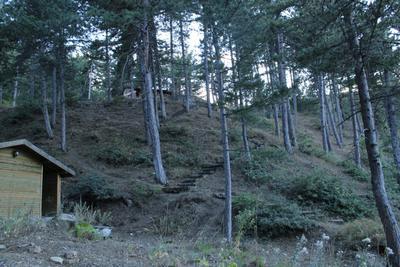 деревья деревья природа