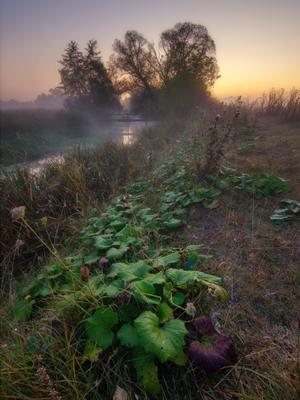 Рассвет на берегу реки пейзаж природа туман река волчья