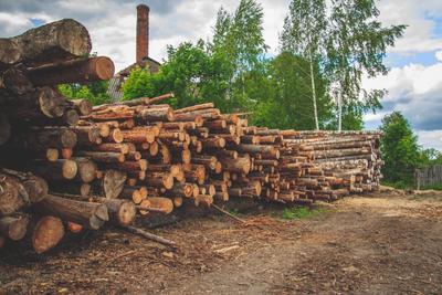 Лесозаготовка бревно лес древесина лесопилка пилорама