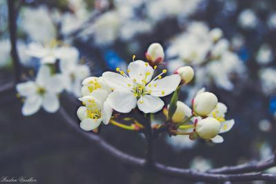 Цветочек! Зародыш цветок жизнь дерево