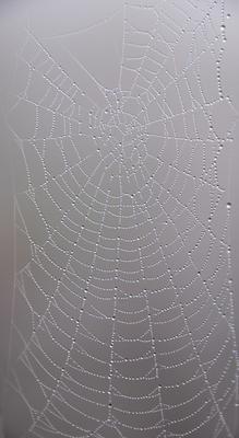 стеклянная паутина