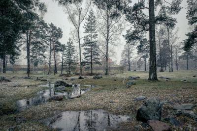 Майский снег приозерск корела крепость снег деревья лужа камни пейзаж природа