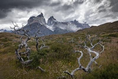 Чилийская Патагония. Торрес дель Пайне