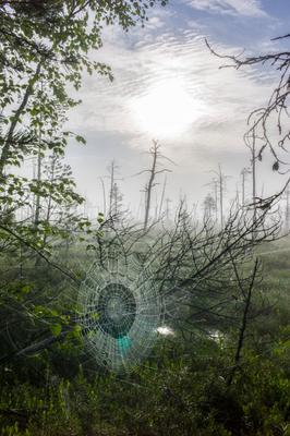 в паутине утра Западная Сибирь тайга Васюганские болота