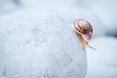 Snail on a stone snail, stone, white
