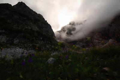 Облачные цветы Кавказ горы цветы облака горные Адыгея