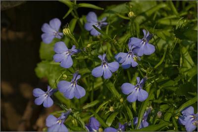 * Мотыльки  прилетели * лето природа цветы