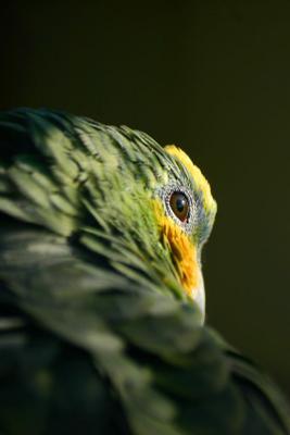 Взгляд попугй птица птицы взгляд