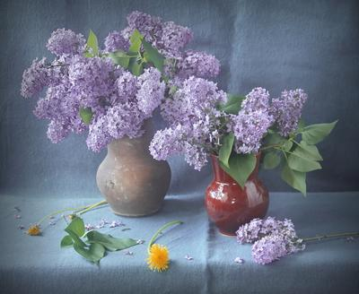 Сирень Сирень весна цвет колорит нюанс