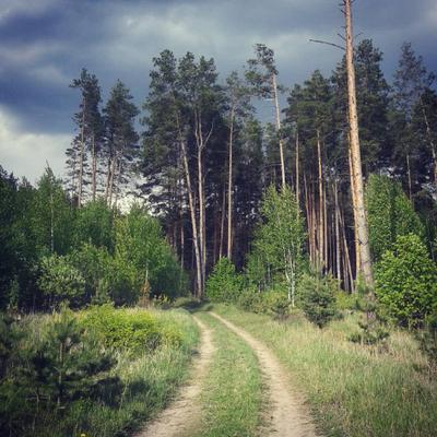 Вхожу я в лес перед дождём... пейзаж погода лес