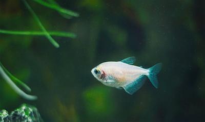 голубой плавник рыбка рыба вода глубина макро