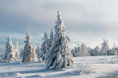 Северное безмолвие*** лес снег зима