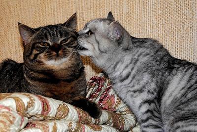 По секрету... кошки