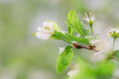 *** Микромир природа флора зелёный цвет капли макро цветение весна цветы белые крупным планом нежность зелень весенняя