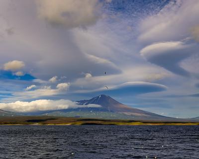 чайки и облака берег вулкан камчатка облака сентябрь чайки