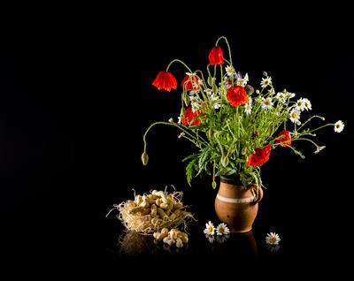 Полевые цветы Маки ромашки кувшин орехи