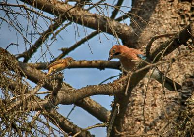 разговор птицы лес встреча
