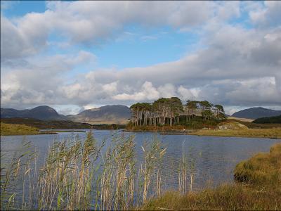 Сосновый остров остров сосны горы трава озеро облака конемара ирландия
