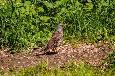 *** птица природа солнечный день лето