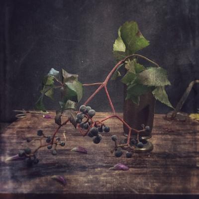 С виноградной веткой виноград осень октябрь