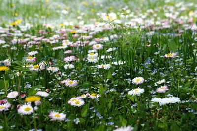 Пестро-весеннее весна первоцветы