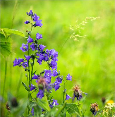 Альпийский лужок цветы трава Альпы Франция