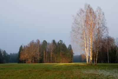 Павловский парк. Надвигается туман... Павловск парк осень природа