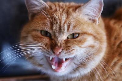 Котейка кот котэ котик котики котенок котейка инстакот инстаграманет инстатаг коты котята котя котяра котятки котёнок коте котопес кота котейки котикиправятмиром котаны кошка кошки кошечка кошара кошаки кошкитакиекошки кошкамоя
