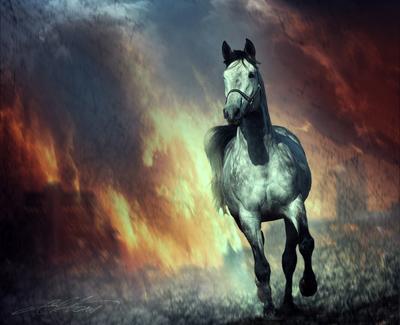 Paris in Fire Digital Photo Art Horses Eltons Fantasies