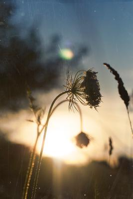 Закат летнего солнца закат лето