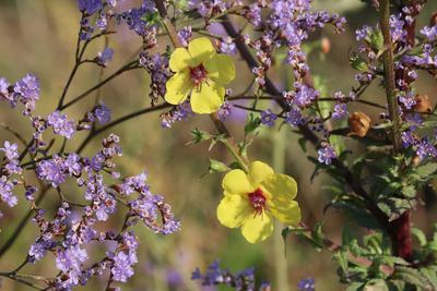 Полевые цветы:  осень... полевые цветы осенние