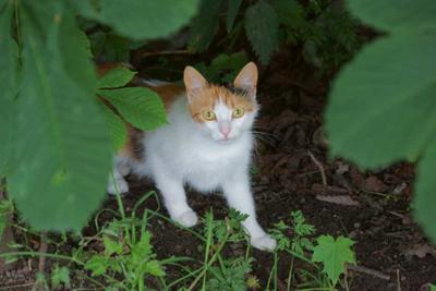 Кот. кот животное
