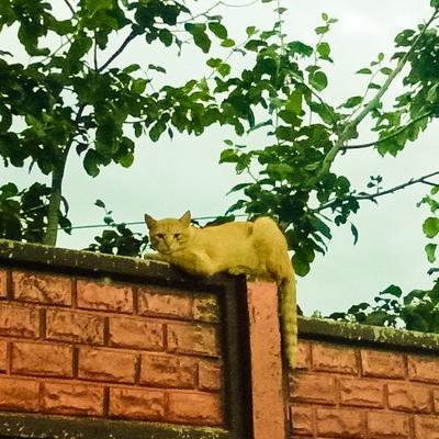 Отдых на заборе Рыжый кот