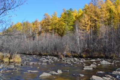 река Никишиха, осень реки Забайкалье осень