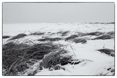 Северный ветер Ильмень озеро трава дерево берег мороз ветер