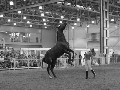 Выступление конь