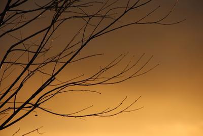 Осенний закат осень ноябрь ветви дерево закат