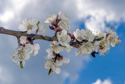 Уже весна. Первые. к.8 Весна