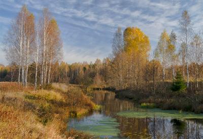 Осень золотая пейзаж осень березы речка