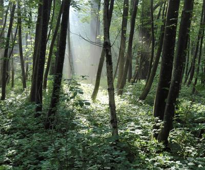 Утро в каком-то лесу утро свет лес